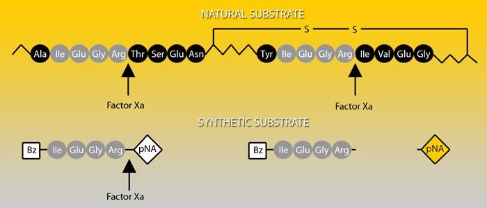 Factor Xa Chromogenic Substrate
