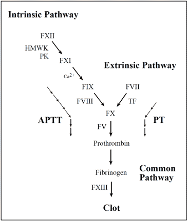 Activated Protein C (APC) and Factor V Leiden - Diapharma