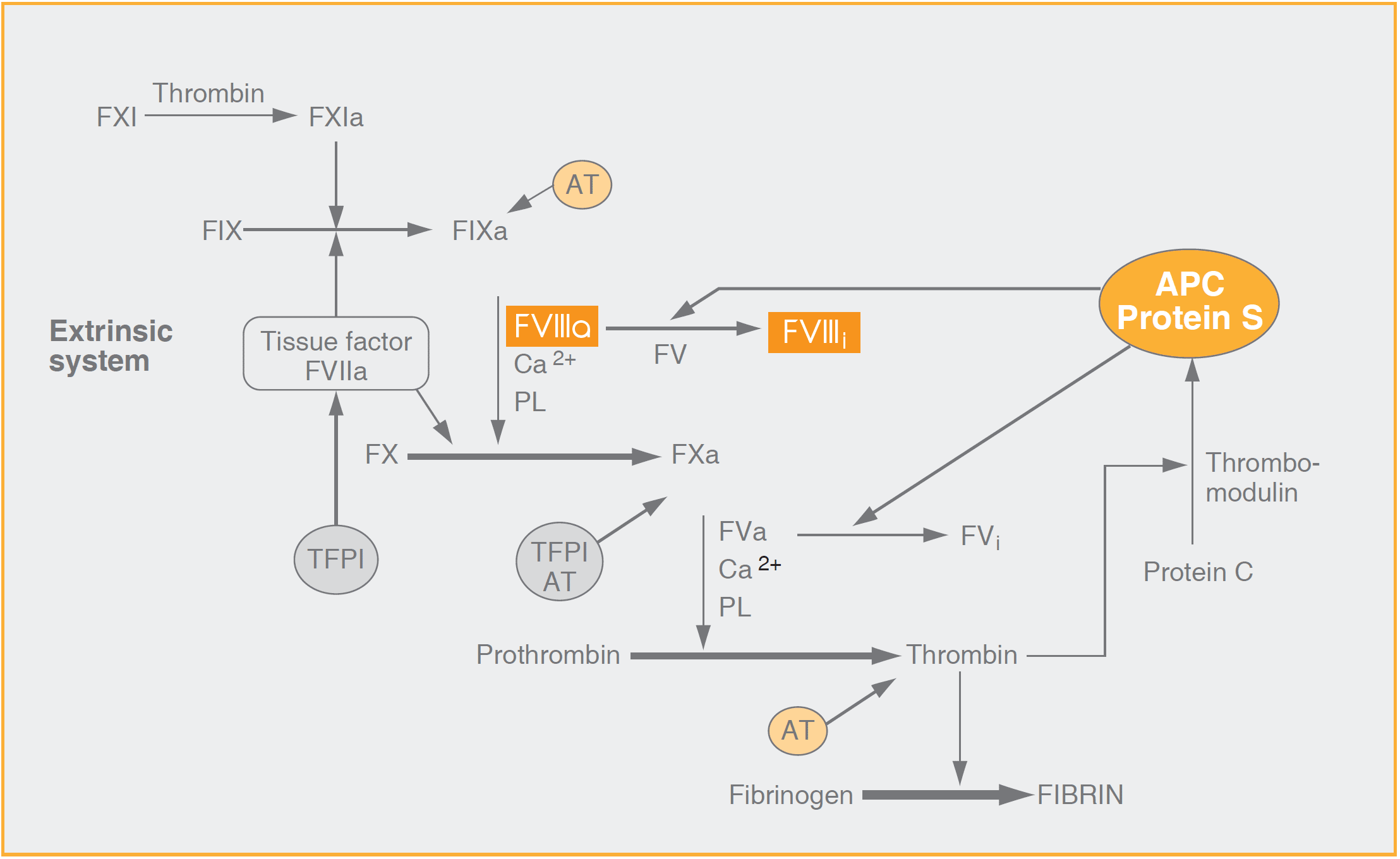 Factor Viii Fviii Diapharma Here Is The Final Schematic Somewhat Simplified Chromogenic Assay Test Kit