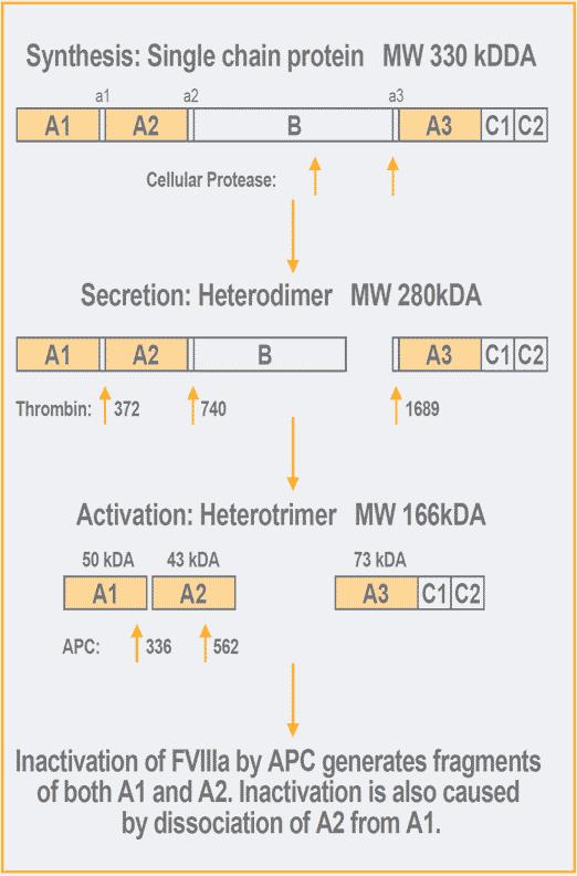 chromogenic factor viii assay test kit