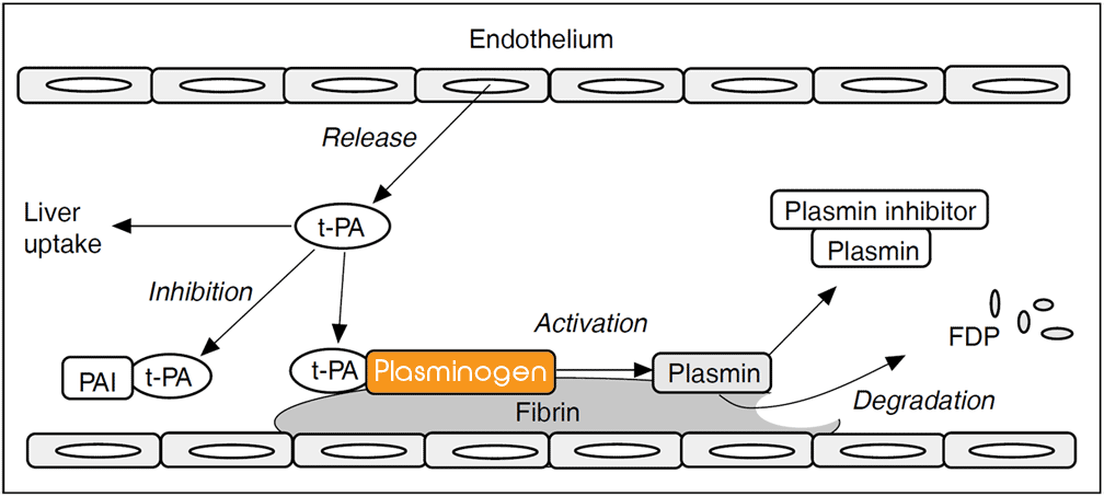 plasminogen assay test kit