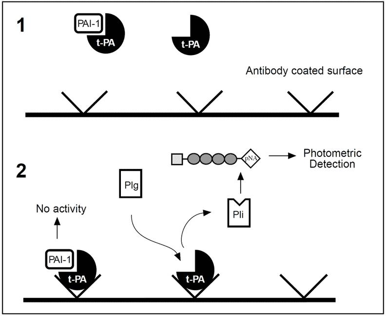 Pulse Radar Block Diagram also Veins besides US6226552 in addition Tag Septic Shock Prognosis Elderly moreover Tissue Plasminogen Activator Tpa. on deep thrombosis