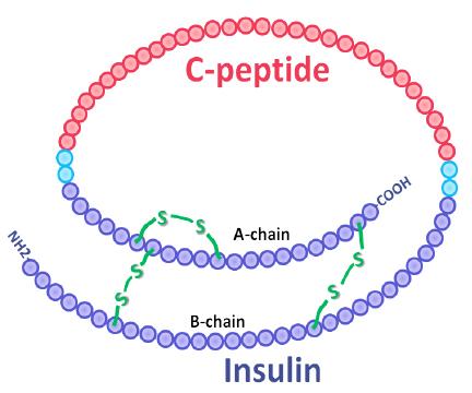 C-peptide Insulin ELISA assay test kit