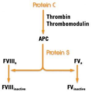 Thrombophilia protein c pathway assay test kit