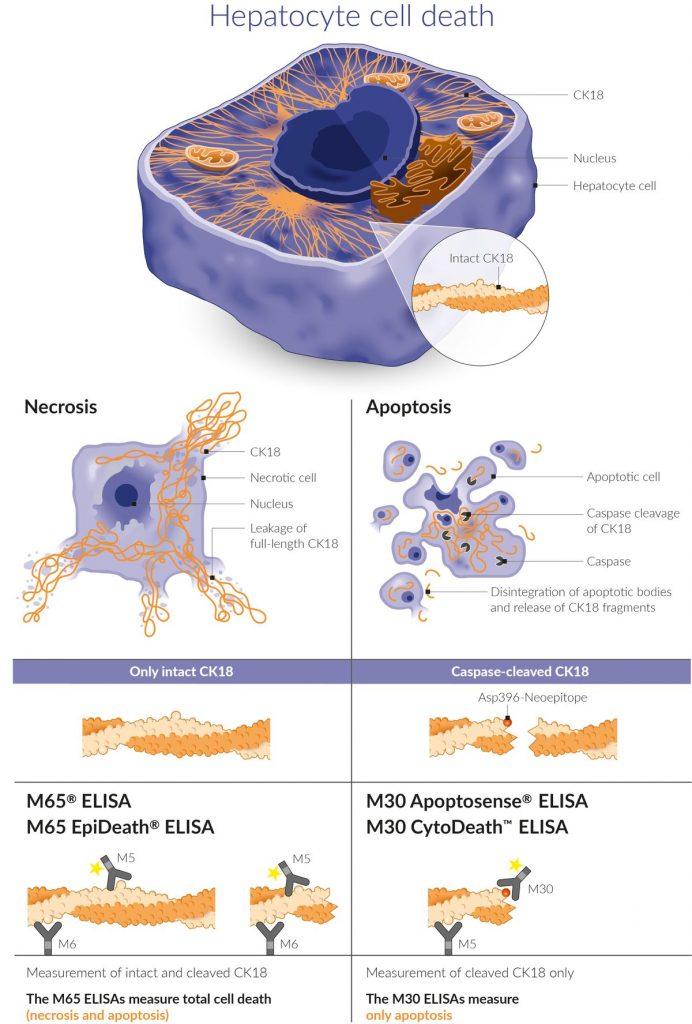 K18 Liver Injury Biomarker