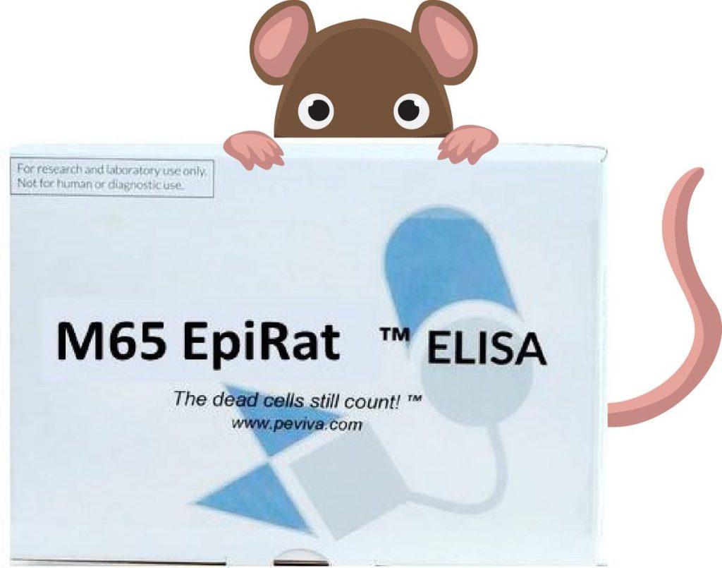 rat elisa Translational Drug Safety Studies