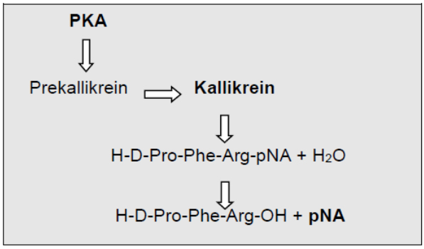 prekallikrein activator assay