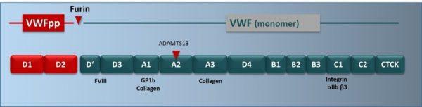 vWF Activity, Antigen, Collagen Binding, Propeptide