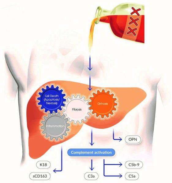 complement biomarker assays