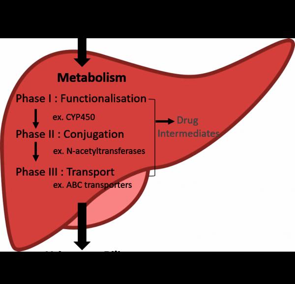 liver drug metabolizing enzymes transporters (DMETs) DILI
