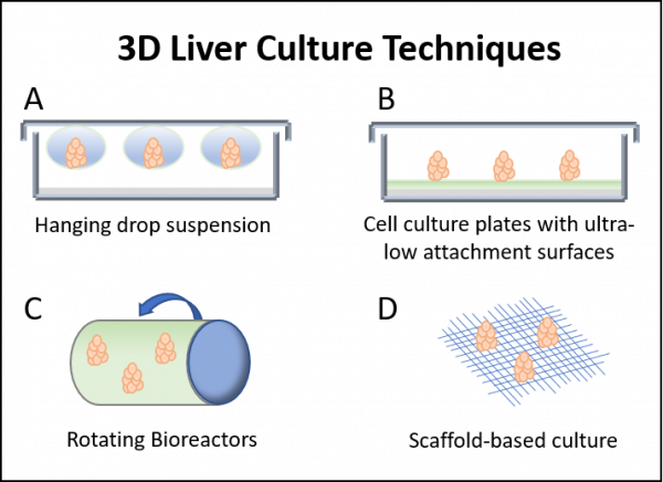 3D liver culture techniques hanging drop suspension, cell culture plates coated ultra-low cell attachment surfaces, rotating bioreactors, scaffold-based culture systems