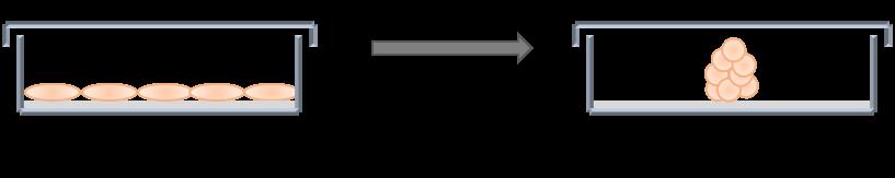 3D liver organoids, EGF, FGF, Wnts, Rspo, TGF-β